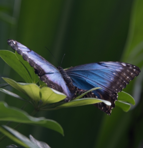 Key west 3-18 butterflies and hemingway (14 of 26)