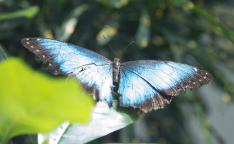Key west 3-18 butterflies and hemingway (6 of 26)